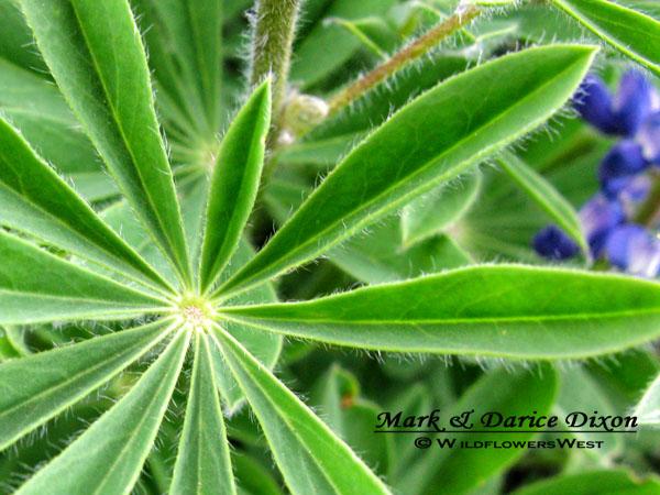 foliage macro, glaborus underside