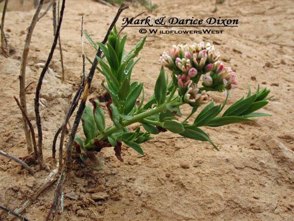 Pawnee Butte, Colorado, plant location