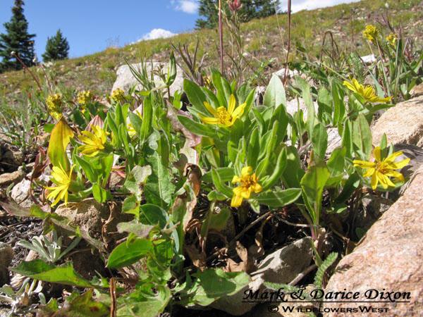 Boreas Pass Colorado, plant location