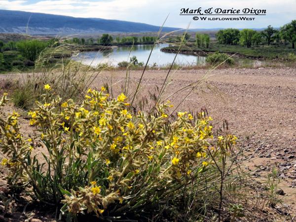 Browns Park National Wildlife Refuge, Colorado plant location
