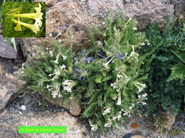 Rocky Mountain National Park, plant location